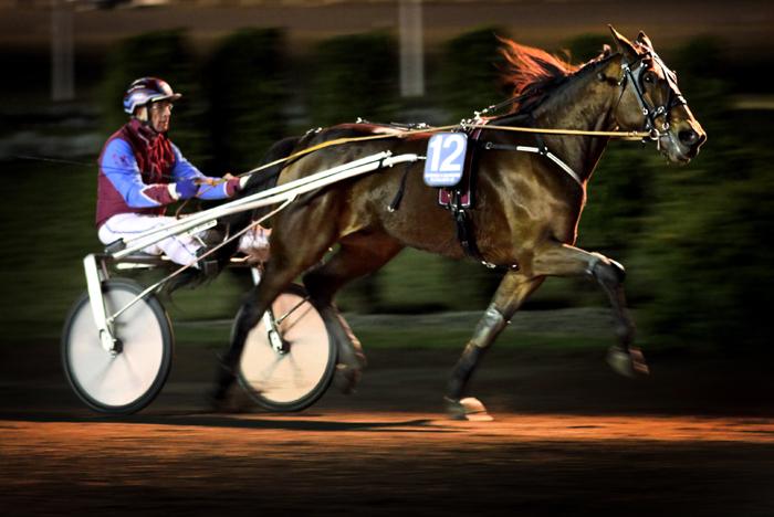 häst2-0