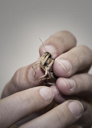 insekter7