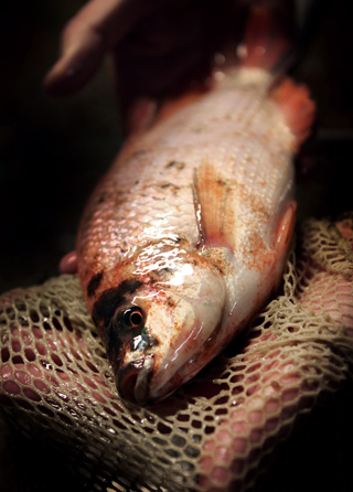 fiskodling5