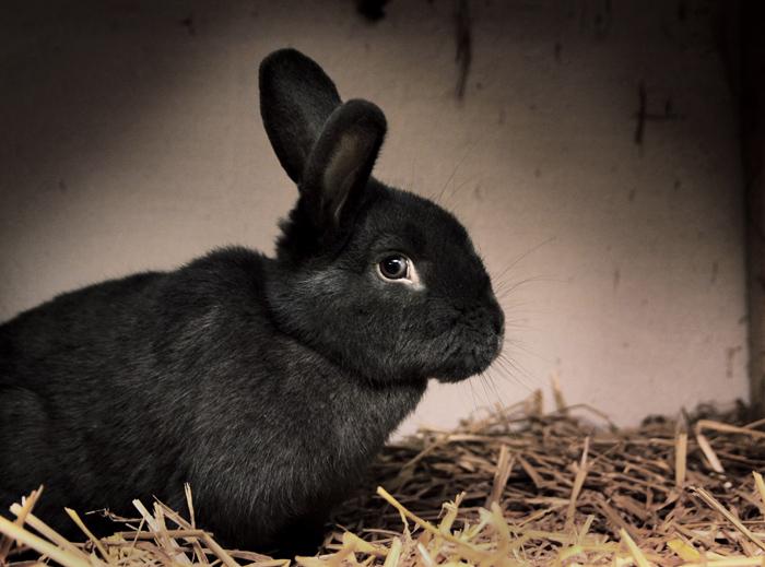 Kaninkott2